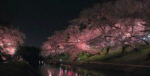 岡崎公園の桜 ライトアップ時間