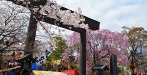 開成山公園の桜 屋台