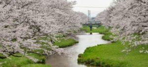 玉造温泉の桜祭り